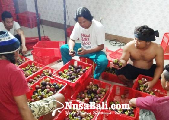Nusabali.com - bali-gagal-panen-manggis-dan-durian