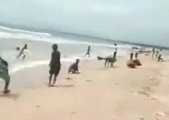Nusabali.com - rezeki-dari-laut-ribuan-ikan-lemuru-terdampar-di-pantai-kuta