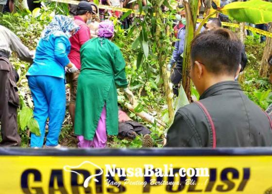 Nusabali.com - seorang-petani-di-karangasem-tewas-tertimpa-pohon