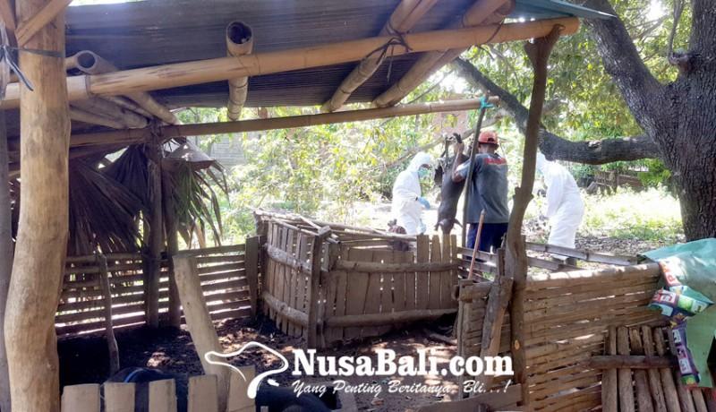www.nusabali.com-pasokan-minim-harga-daging-babi-meroket