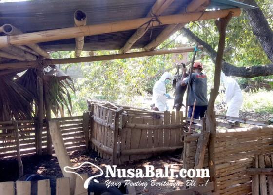 Nusabali.com - pasokan-minim-harga-daging-babi-meroket