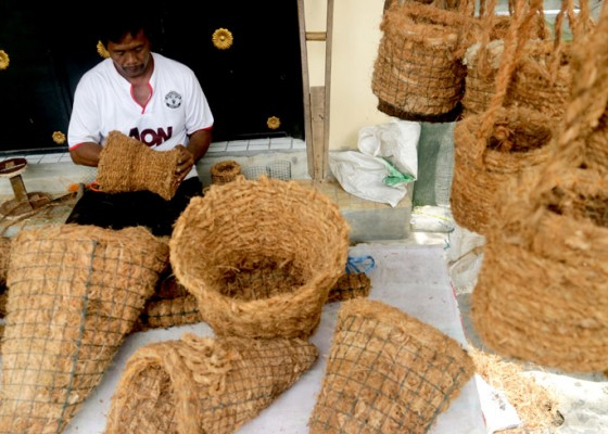 Nusabali.com - pot-bunga-sabut-kelapa