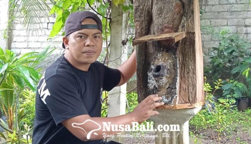 www.nusabali.com-sebulan-raup-rp-50-juta-dari-bisnis-madu-di-tengah-pandemi-covid-19