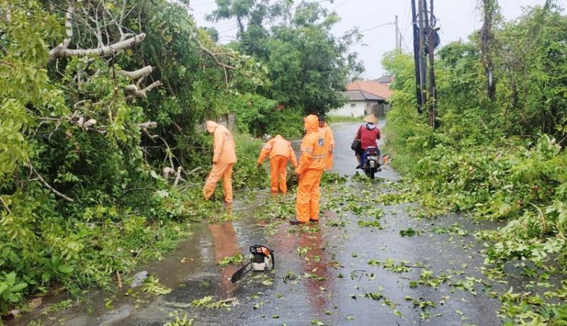 www.nusabali.com-cuaca-ekstrim-pohon-bertumbangan