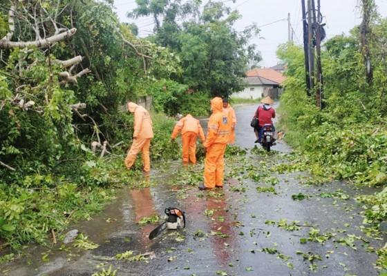 Nusabali.com - cuaca-ekstrim-pohon-bertumbangan