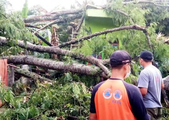 Nusabali.com - hujan-deras-pohon-timpa-tk-dan-rumah