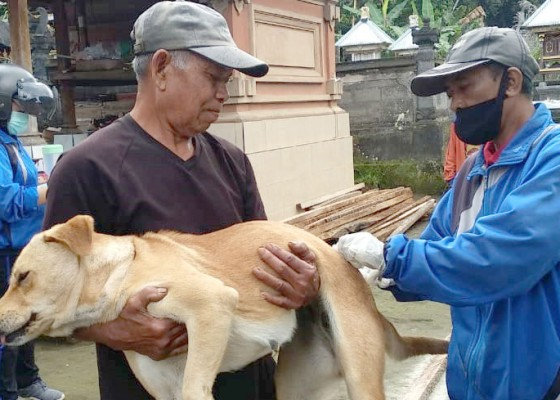 Nusabali.com - vaksinasi-rabies-2021-sasar-11-desa
