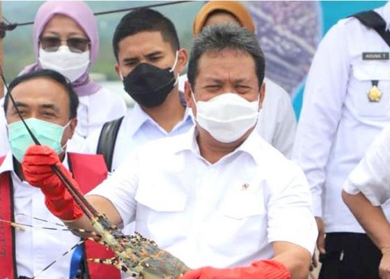 Nusabali.com - ri-jadi-pengekspor-lobster-terbesar-dunia