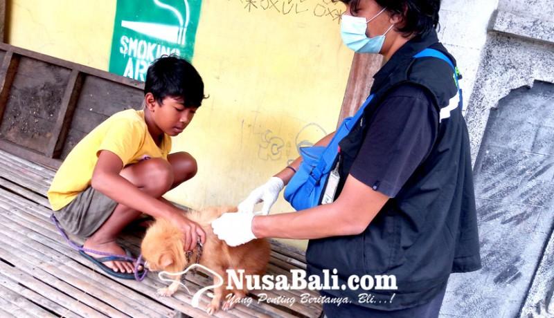 www.nusabali.com-vaksin-rabies-untuk-anjing