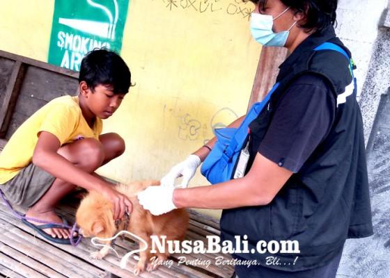 Nusabali.com - vaksin-rabies-untuk-anjing