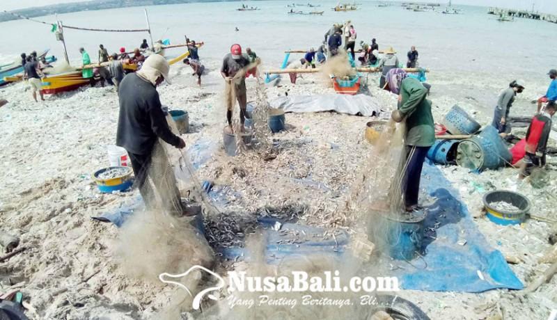 www.nusabali.com-nelayan-kedonganan-panen-lemuru-di-tengah-cuaca-ekstrem