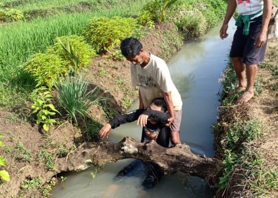 Nusabali.com - diduga-coba-bunuh-diri-dengan-sayat-tangannya-ditemukan-kritis-di-sawah