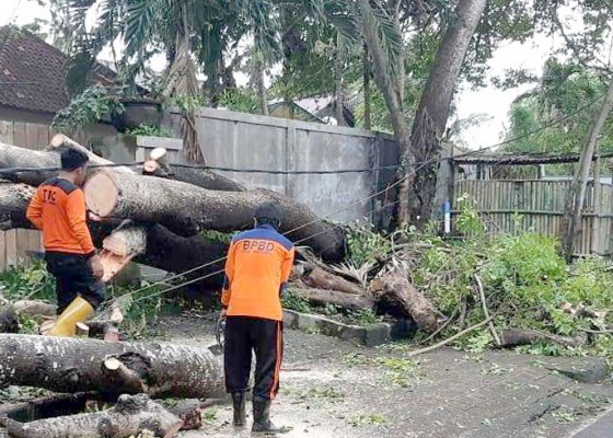 Nusabali.com - bpbd-badung-catat-18-bencana-dalam-sehari