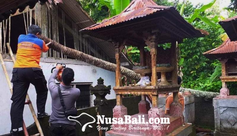 www.nusabali.com-pohon-tumbang-timpa-palinggih-dan-rumah