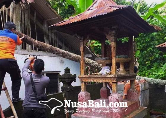 Nusabali.com - pohon-tumbang-timpa-palinggih-dan-rumah