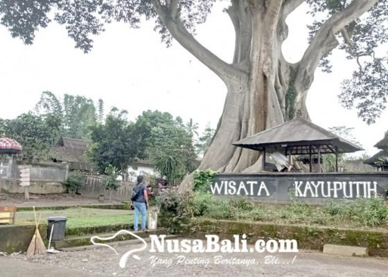 Nusabali.com - pengelola-objek-wisata-kayu-putih-rancang-toko-souvenir