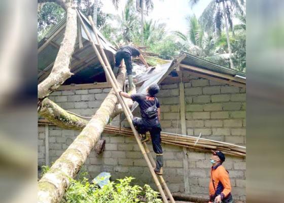 Nusabali.com - bale-bengong-tertimpa-pohon-timbul