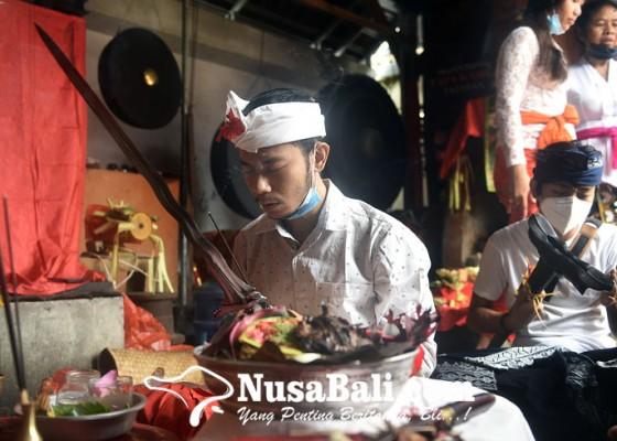 Nusabali.com - ritual-mamitang-9-keris-di-pande-urip-wesi-tapa-karya-tonja