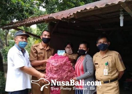 Nusabali.com - desa-pedawa-dan-tigawasa-dipinang-untuk-pengembangan-jahe-gajah
