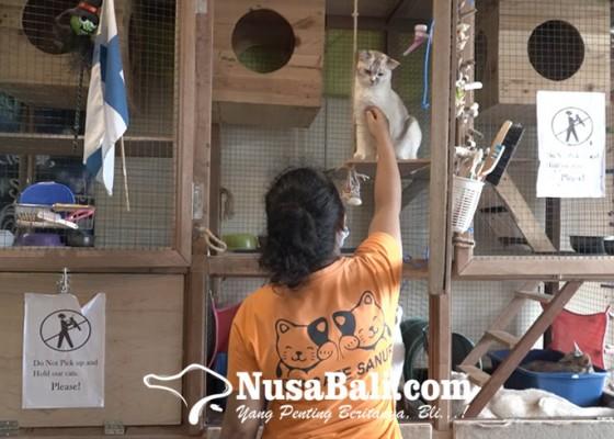 Nusabali.com - cat-cafe-sanur-kafe-unik-yang-ingin-selamatkan-kucing-jalanan