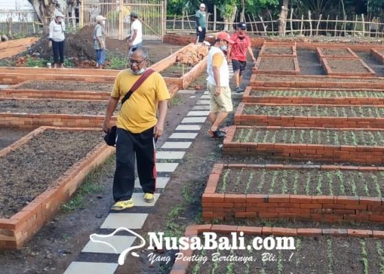 Nusabali.com - manfaatkan-kompos-tps-3r-ajak-warga-kembangkan-urban-farming