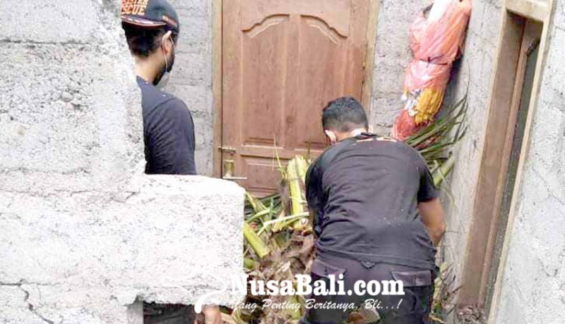 www.nusabali.com-pohon-kelapa-tumbang-timpa-rumah