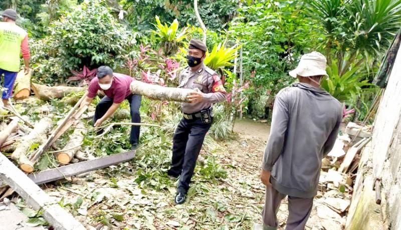 www.nusabali.com-pohon-bertumbangan-diterjang-angin
