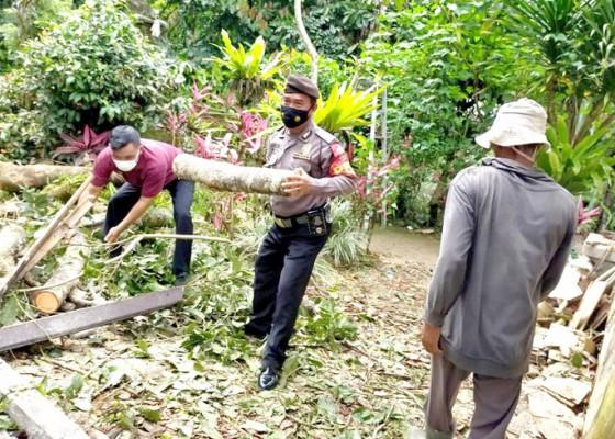 Nusabali.com - pohon-bertumbangan-diterjang-angin