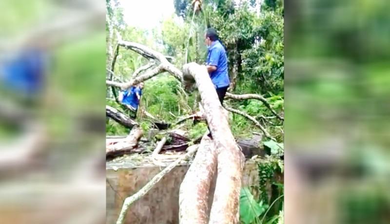 www.nusabali.com-reservoar-rusak-tertimpa-pohon