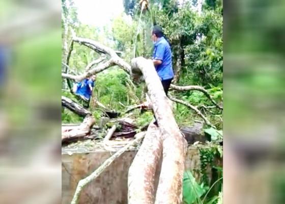 Nusabali.com - reservoar-rusak-tertimpa-pohon