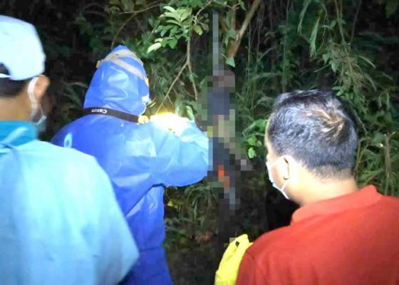 Nusabali.com - pria-lajang-membusuk-di-pohon-jambu