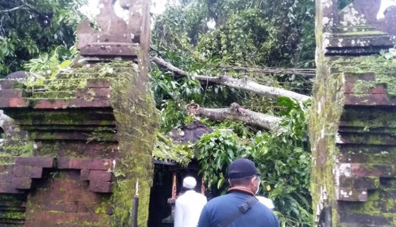 www.nusabali.com-hujan-deras-pohon-tumbang-timpa-pelinggih-pura-prajapati