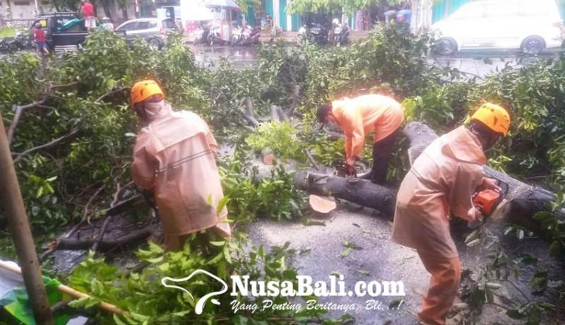 www.nusabali.com-pohon-tumbang-timpa-3-motor-di-barat-pasar-umum-negara