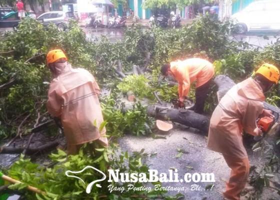 Nusabali.com - pohon-tumbang-timpa-3-motor-di-barat-pasar-umum-negara