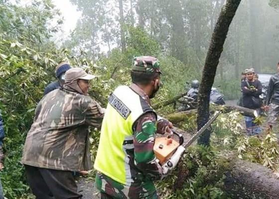 Nusabali.com - longsor-dan-pohon-tumbang-di-kintamani