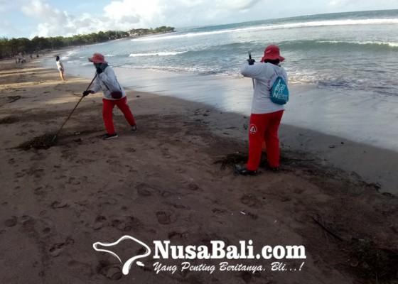 Nusabali.com - pantai-kuta-diterjang-sampah-rumput-laut