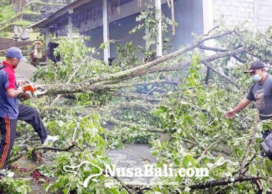 Nusabali.com - hujan-angin-pohon-bertumbangan