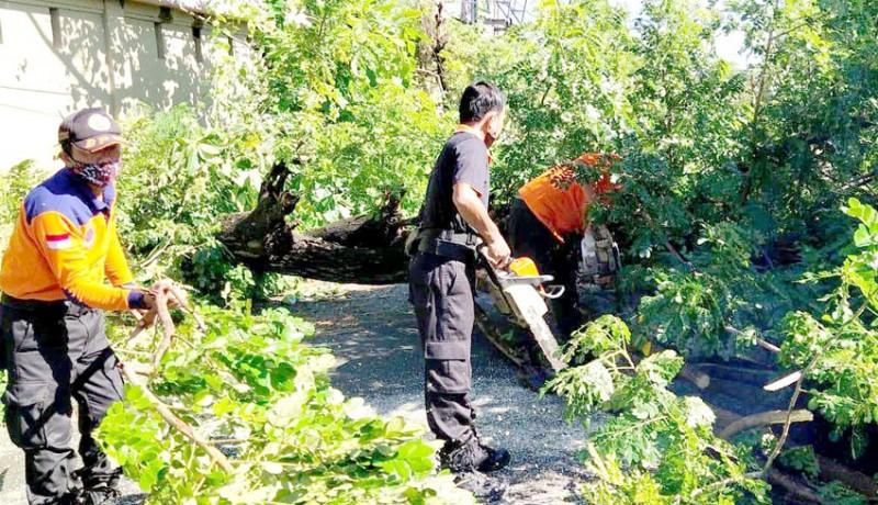www.nusabali.com-pohon-perindang-tumbang-tutup-akses-jalan