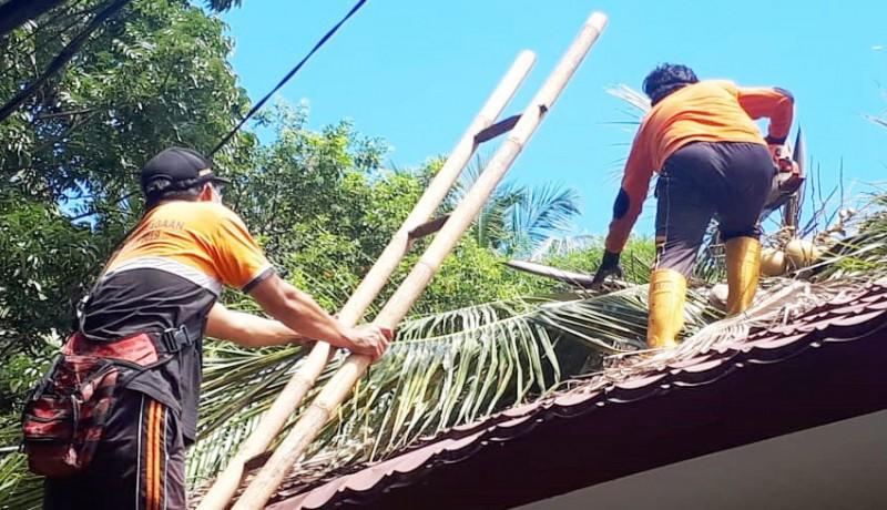 www.nusabali.com-tumbang-pohon-kelapa-timpa-smpn-4-tejakula