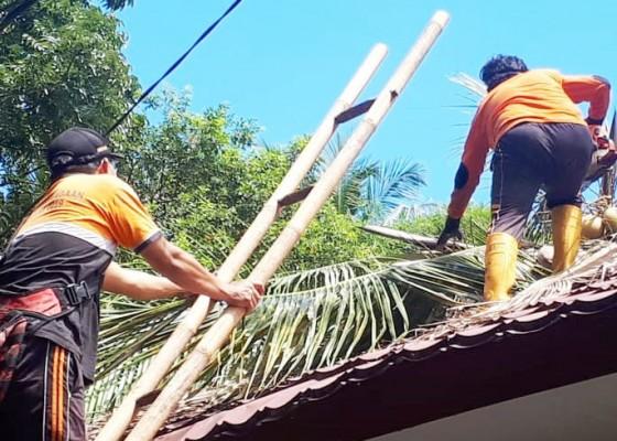 Nusabali.com - tumbang-pohon-kelapa-timpa-smpn-4-tejakula