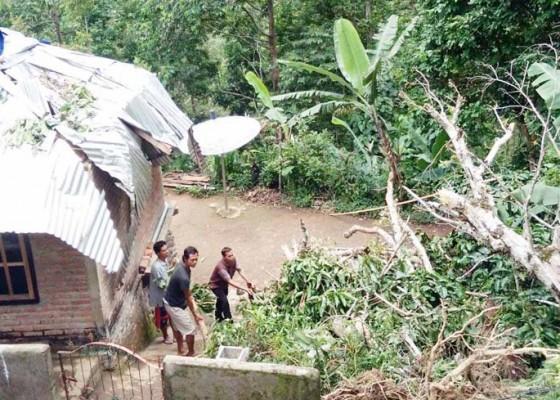 Nusabali.com - ditimpa-pohon-rumah-warga-rusak