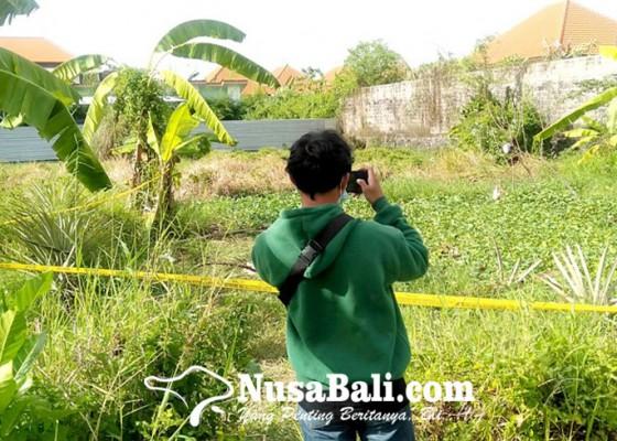 Nusabali.com - mayat-bugil-di-kebun-kangkung-gegerkan-warga
