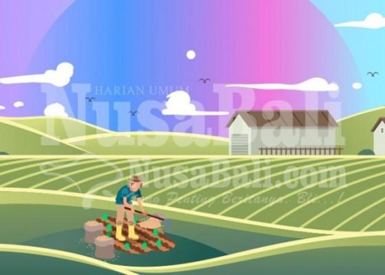 Nusabali.com - refleksi-eksistensi-sektor-pertanian-bali-di-masa-pandemi