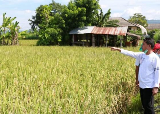 Nusabali.com - toss-karangdadi-produksi-3-jenis-pupuk-organik