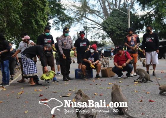 Nusabali.com - pakan-kera-dibantu-lpd-dan-warga