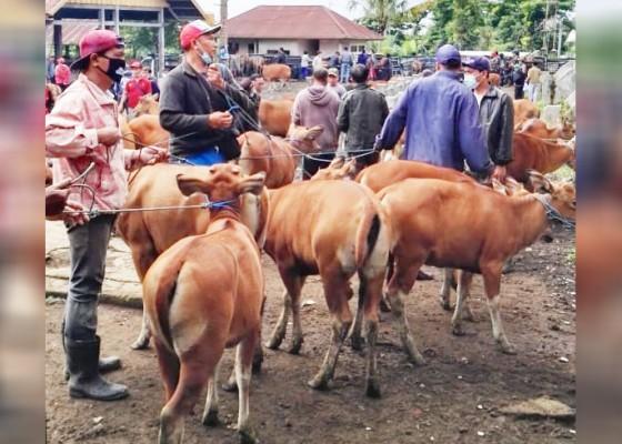 Nusabali.com - pasar-hewan-kayuambua-sumbang-pad-rp-200-juta-per-tahun
