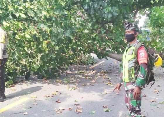 Nusabali.com - diserempet-truk-pohon-tumbang-bikin-macet