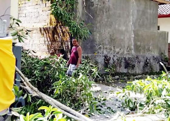 Nusabali.com - tumbang-dahan-pohon-bunut-timpa-rumah