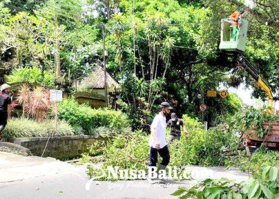 Nusabali.com - bupati-sedana-arta-pantau-pemangkasan-pohon