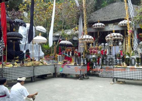 Nusabali.com - raja-tabanan-sembuh-berkat-kelapa-di-dalam-rumpun-bambu